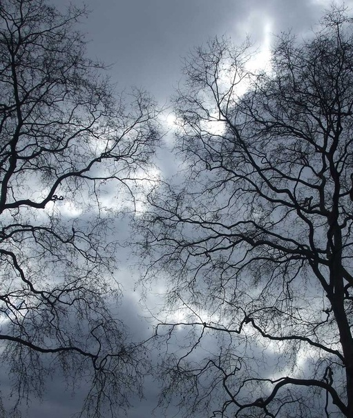 lightning, trees, winter, London